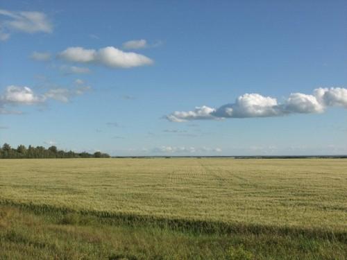 big-fields-big-skies