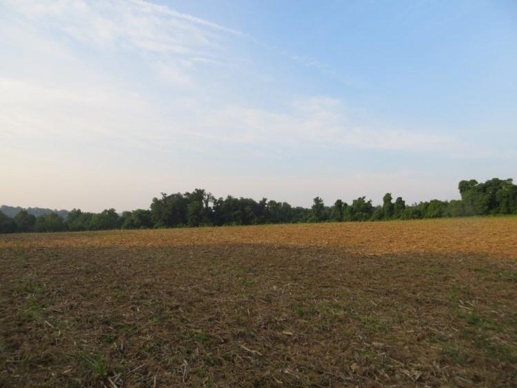 field 3 001